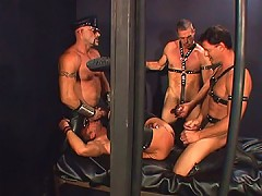 All four leather clad bears got together to play with each other's dicks and asses