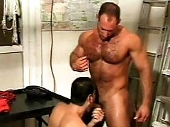 Big muscled gay bears in dick sucking display in the stockroom